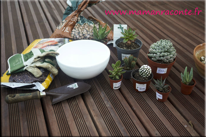 diy mon jardin miniature de cactus et succulentes les cahiers de lucie rose. Black Bedroom Furniture Sets. Home Design Ideas
