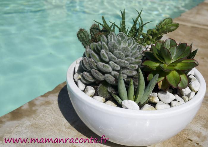 Diy Mon Jardin Miniature De Cactus Et Succulentes Les Cahiers De