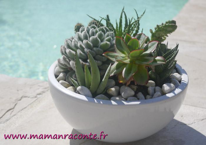 7. jardin miniature de cactus