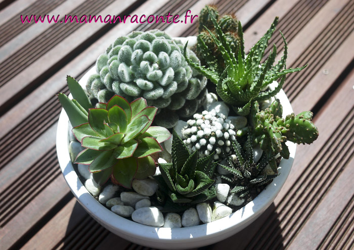 diy mon jardin miniature de cactus et succulentes les. Black Bedroom Furniture Sets. Home Design Ideas