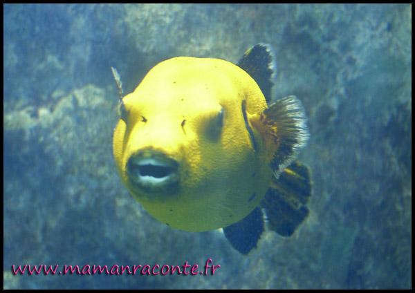 Aquarium de Lyon 1
