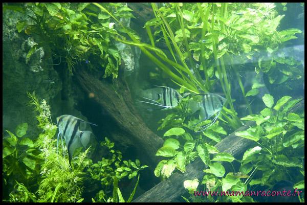 Aquarium de Lyon 3