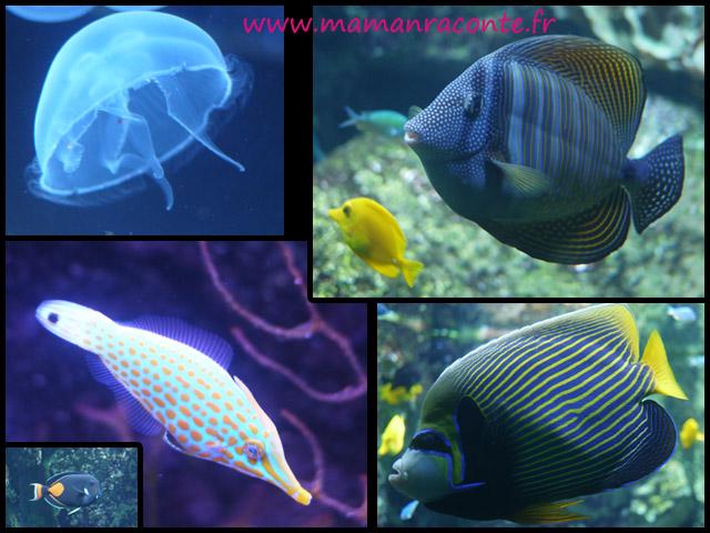 Aquarium de Lyon 5