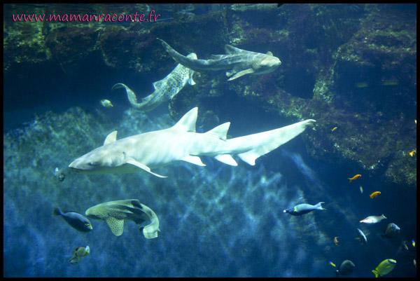 Aquarium de Lyon 6