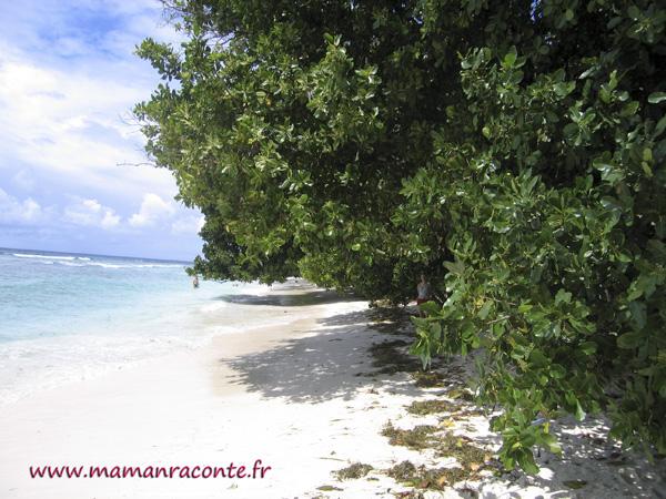 Voyage aux Seychelles - La Digue5