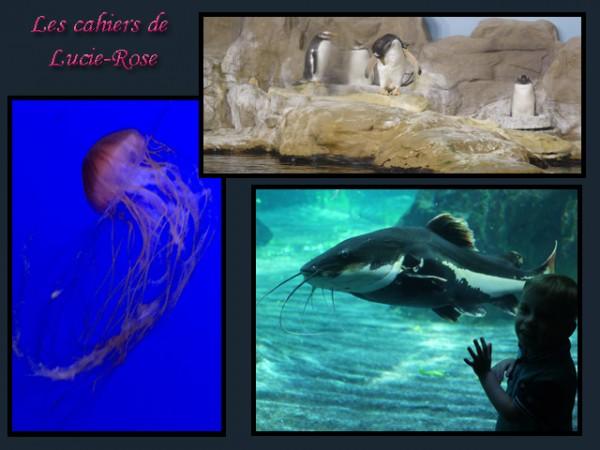 Genova aquarium @les cahiers de Lucie-Rose