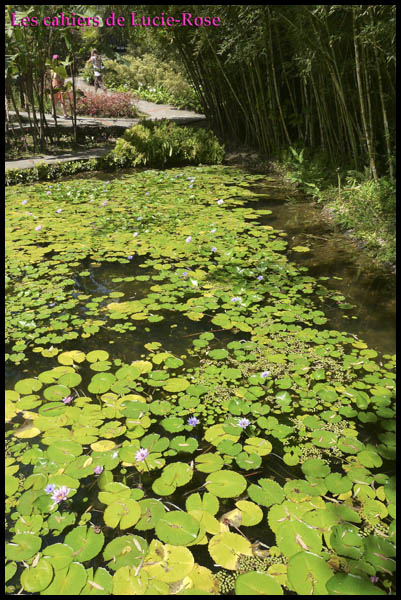 10. Le Jardin de Balata (Nénuphars)