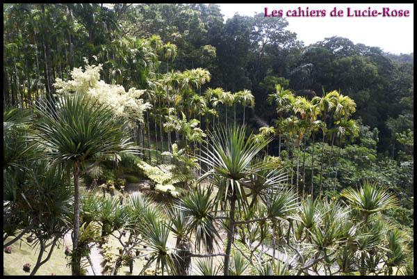 13. Le Jardin de Balata