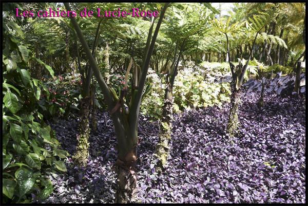 17. Le Jardin de Balata