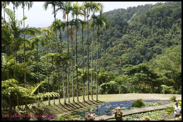 2. Le Jardin de Balata