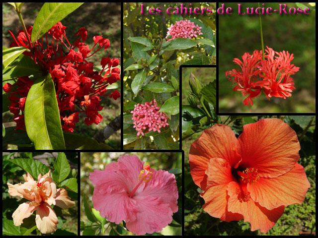 6. Le Jardin de Balata