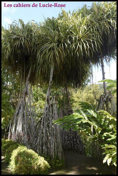 9. Le Jardin de Balata