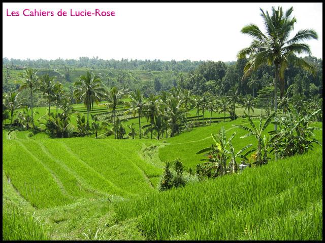 1. Les rizières de Jatiluwih